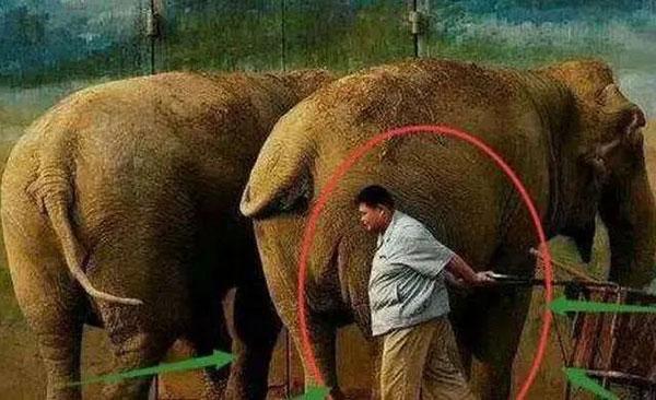 为了生计,孙越还去动物园兼职喂大象